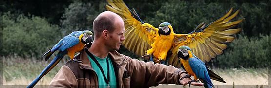 Besøg og Rundvisning i Nordsjællands Fuglepark